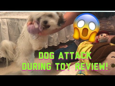 Dog attacks Tsum Tsum toys during Toy review - Unboxing Mystery Packs Blind Bags