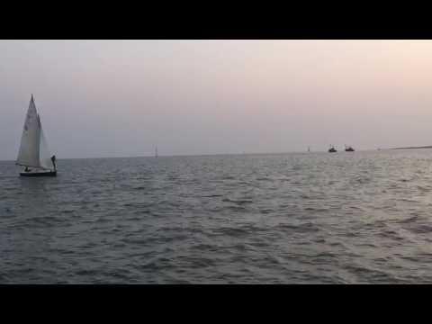 Dolphins Love Sail Boats & Sailors !! Mumbai Harbour Gate way of India