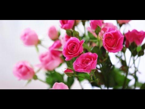 تفسير رؤية الورد الاحمر والابيض والاصفر في المنام Youtube