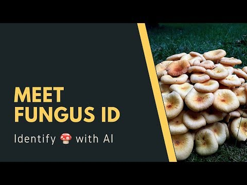 we-build-an-ai-to-help-you-id-mushrooms
