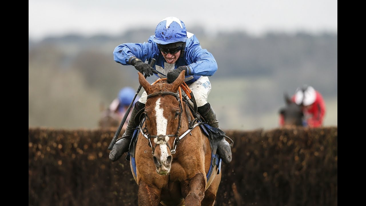 Dream Alliance: how a horse born on a slag heap went on to win the Welsh Grand National