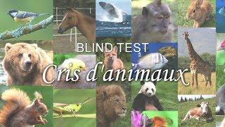 BLIND TEST : Cris d'animaux