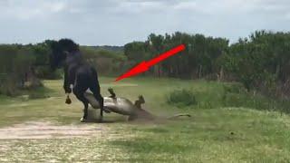 ЛОШАДЬ ПРОТИВ крокодила, льва, жеребца, пумы и даже петуха! Кони в деле!