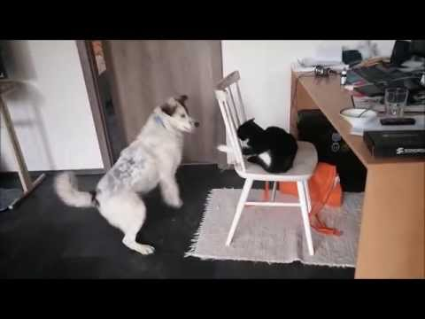 Cat and dog – fail