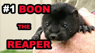 #1 Baby Boon: The Beginning of a Legend!