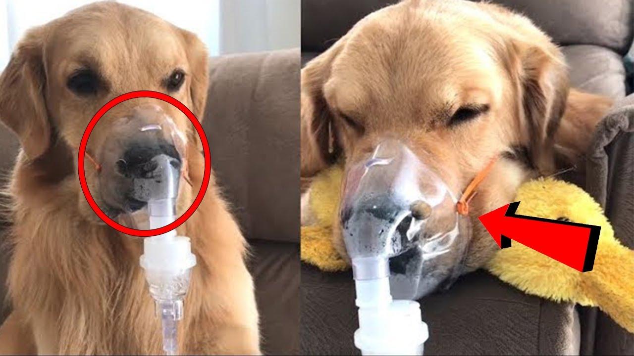 इस मासूम कुत्ते की हालत देखकर आपका दिल भर आएगा | Condition of this innocent dog will fill your heart