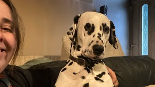 Is a Dalmatian the right dog for you?