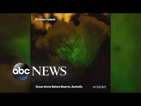 Bio-luminescent 'ghost fungi' light up in Australia