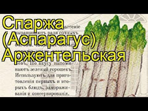Спаржа Аржентельская (Спаржа). Краткий обзор, описание характеристик, где купить семена aspáragus