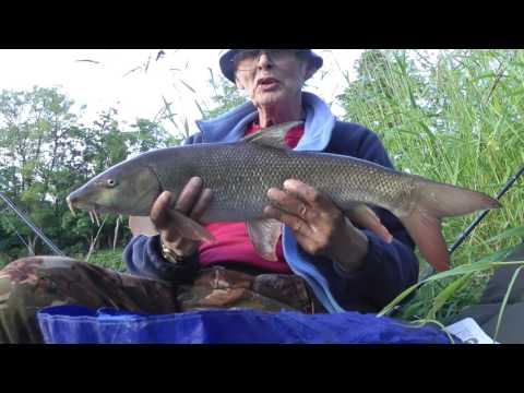 211 A short but successful evening on the River Swale