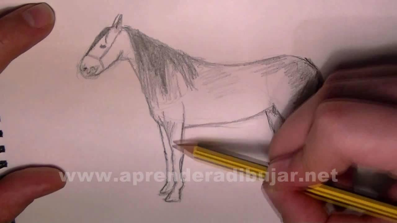 Como dibujar un caballo a lapiz paso a paso  Dibujos de animales