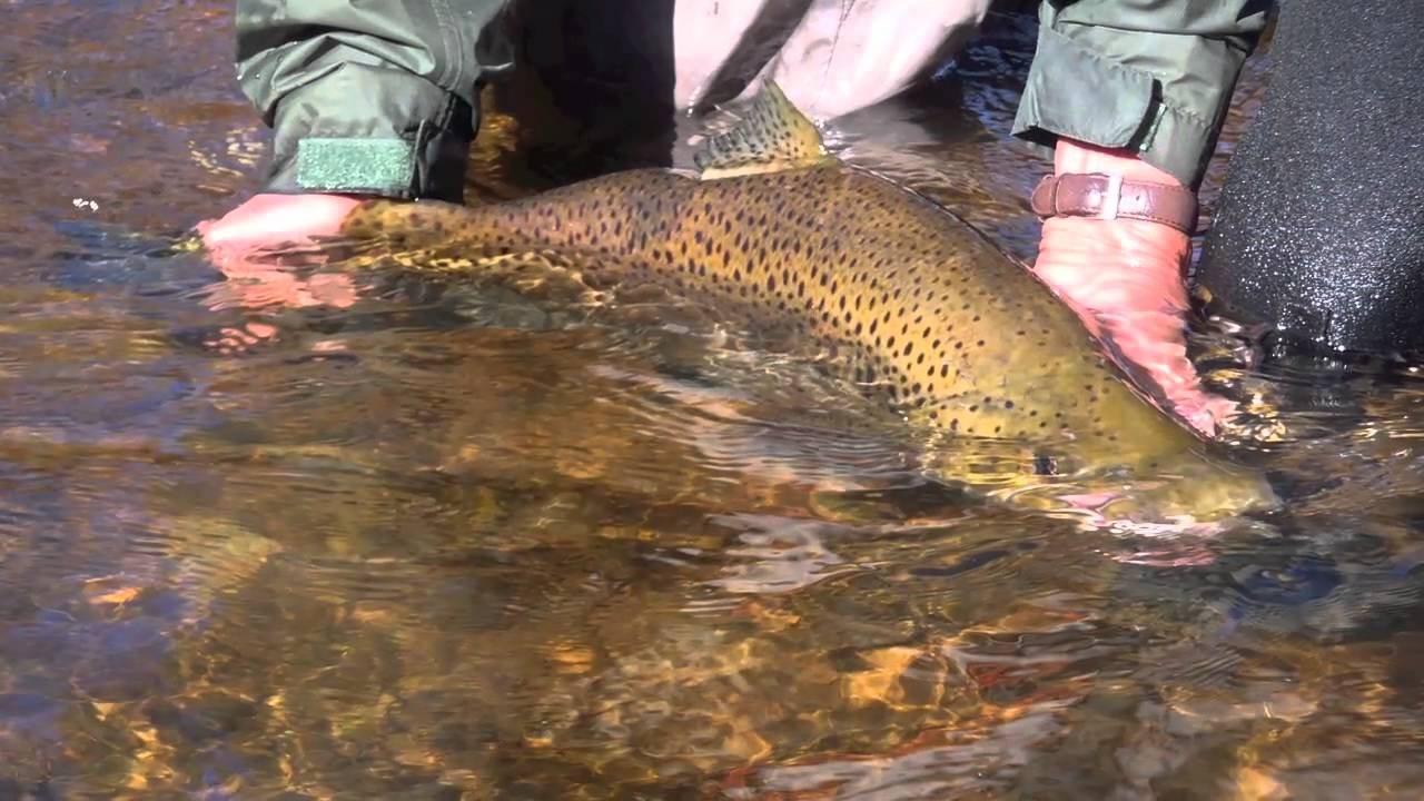 Oak orchard 2010 from richmond youtube for Oak orchard fishing report