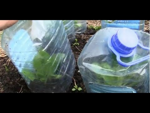 Getting Your Plants Ready To Go Outside Protect From