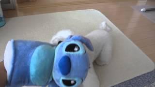 目指せ!! 世界初トイプードルの防衛犬.
