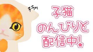 [LIVE] 【配信】わたわた雑談にゃฅ(=›ω‹=)ฅ💦【バーチャル子猫】