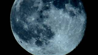 Full Moon Rise UFO / IFO (birds,bats,etc.) Out-takes zoomed/slow motion V10209
