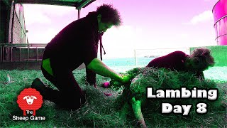 A HUNG LAMB AND I'M NOT SURE I CAN GET IT OUT ALIVE!  |  Vlog 8 - Lambing 2021