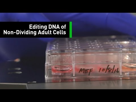Gene Editing Helps Scientists Restore Vision in Adult Mice