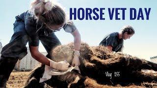 HORSE VET DAY vlog 255