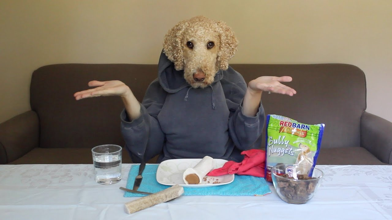 Service dog eating with human hands youtube Dog will eat out of hand but not bowl