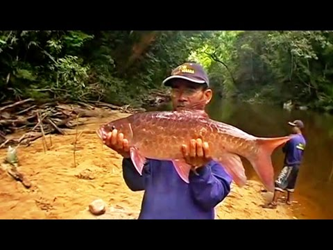 Fishing for Malaysian Mahseer at Pahang National Park