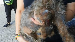 Pomóżcie odebrać nam psy myśliwemu zanim zginą na polowaniach!