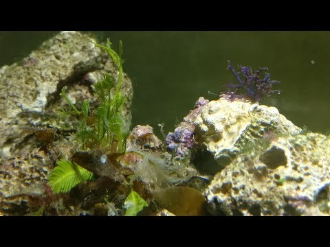 Colorful macro algae - SALE!!! New introduction.