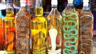 Những điều nên biết trước khi uống rượu rắn