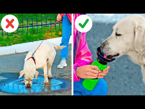 Incredible Hacks For Pet Owners    Must Have Gadgets For Your Pets