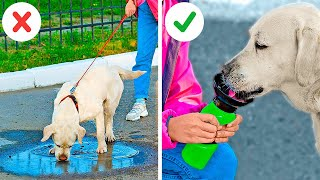 Incredible Hacks For Pet Owners || Must Have Gadgets For Your Pets