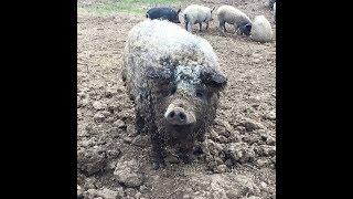 """Необычные животные на ферме """"Покровские Поляны"""""""