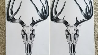 How To Draw a Deer Skull Speed Drawing