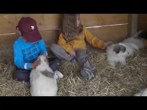 "PYRENEAN MOUNTAIN DOGS OF ""LA BORDA D'URTX"" - LITTER P4"