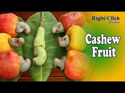 Cashew Fruit - By cashew can prepare fenny & by cashew seeds can use for sweet dishes.
