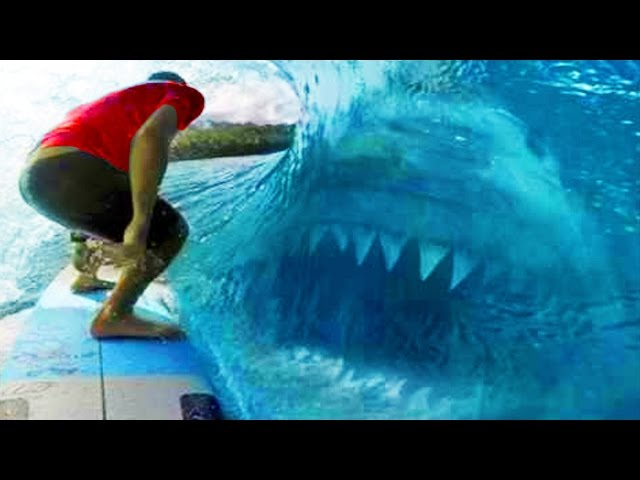 6 Megalodons Caught On Camera & Spotted In Real Life!