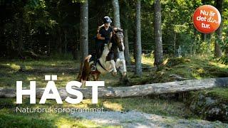 Promotionfilm Kunskapsförbundet Hästutbildning
