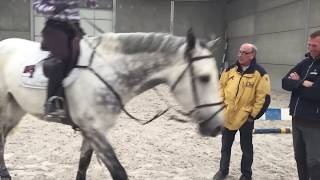Trying horses 2015