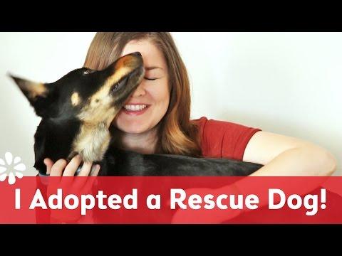 I Adopted a Rescue Dog - Meet Kona!