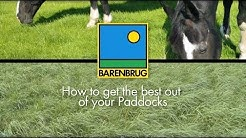 How to Maintain and Renovate Horse Grass Paddocks. Advice on Equine Paddocks