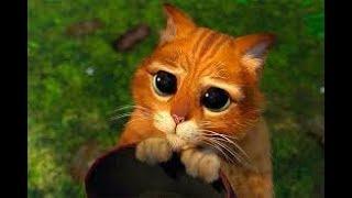 9:27  Приколы с Котами - Смешные коты и кошки 2019 | ТЕСТ НА ПСИХИКУ, ПРОБУЙ НЕ СМЕЯТЬСЯ!