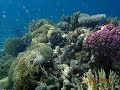 Miracle of the underwater world of the Red Sea Eilat