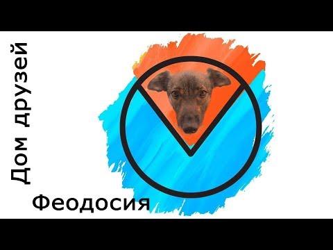 Крым. Помощь бездомным животным.