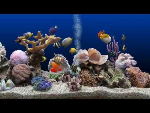 ★ Marine Aquarium ★ 2K Screensaver ★ Blue Ocean ★ WQHD 60fps ★