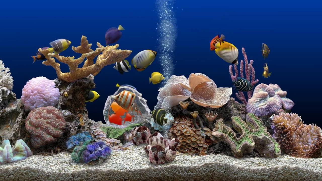 Marine Aquarium Uhd Screensaver Blue Ocean 60fps You