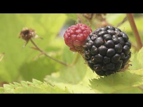 Permaculture Berry Maze - Integrate Not Segregate