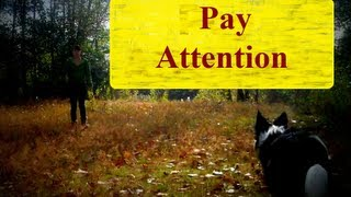 Pay Attention To Handler- Teach Any Dog