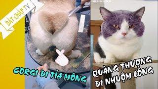 Chó Mèo Hài Hước - Tik Tok Trung Quốc || BẤT CHẤP TV