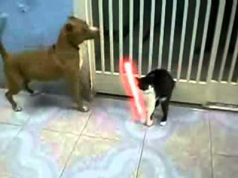 Starwars jedi cat vs dogs