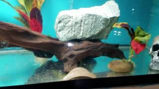 Welcome to the fish room ya'll!!  A little intro to our new fish room and aquariums