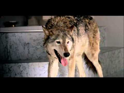 Wolf - Trailer Directed by John Hillcoat